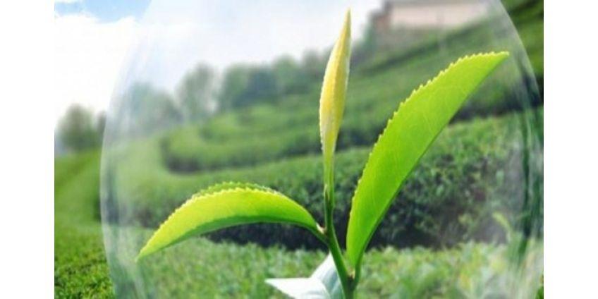 Новые товары для растений в Агрогарант!