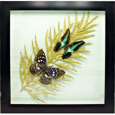 "Картина Бабочки в рамке ""Лист"" 2 шт (30х30 см) Play"