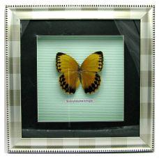 Картина Бабочка в рамке (30х30 см) Грин