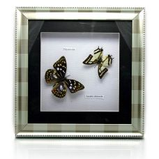 Картина Бабочки в металлической рамке (30х30х4 см) MG