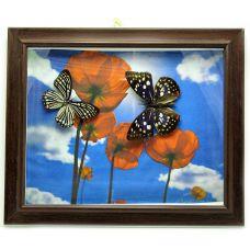 Картина Бабочки в рамке на фоне (30х25х3 см) Second