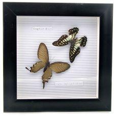 Картина Бабочки в рамке (22,5х22,5х3 см) Two