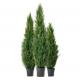 удобрения для хвойных растений агрогарант